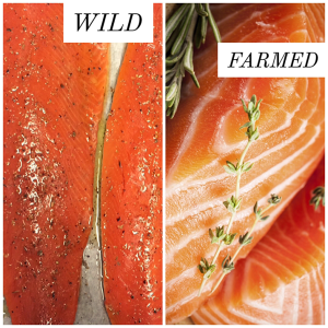 Farm raised vs wild caught fish and other seafood for Farmed fish vs wild