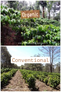 organic-vs-conventional-coffee-farms
